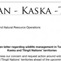 Tahltan-Kaska-Tlingit come together to write an open letter to the Province regarding wildlife management concerns